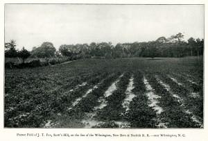 Peanut Field circa 1898